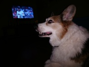 Old Man Zed watching the Astros game.