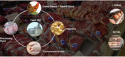 A WEBINAR ON Poultry ERP Software in Delhi India