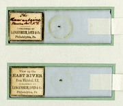 Tiny Mysteries: Decoding the Wagner's 19th-Century Microphotographs