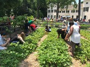 10th Annual Strawberry Festival at Historic Strawberry Mansion