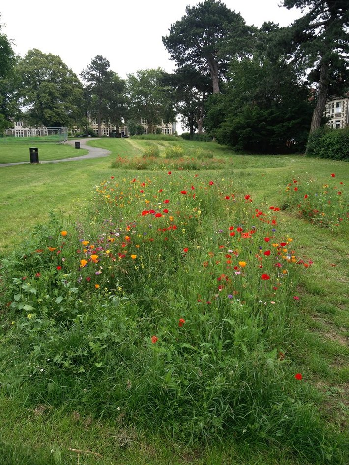 June 2019 Poppies in the Leopold Meadows