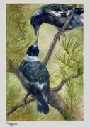 Magpie - 52 Weeks of Watercolour Birds