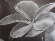 flower_colors