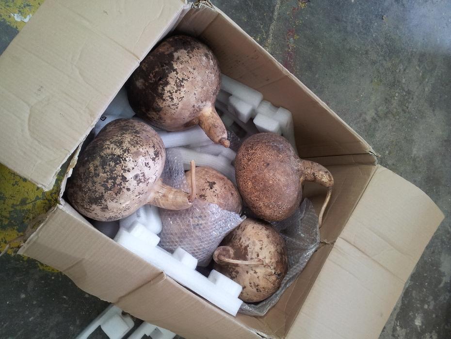 Big box a gourds