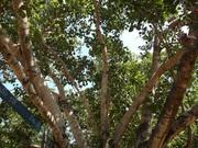 Végétation diverse de la Thaïlande