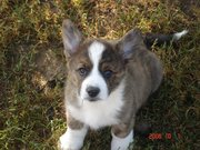 Barnaby as a lil pup
