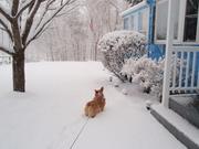 Missy snow...