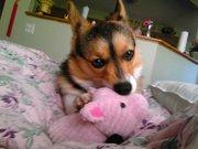 Yuuki & her pig