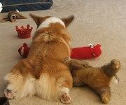Nap with toys!