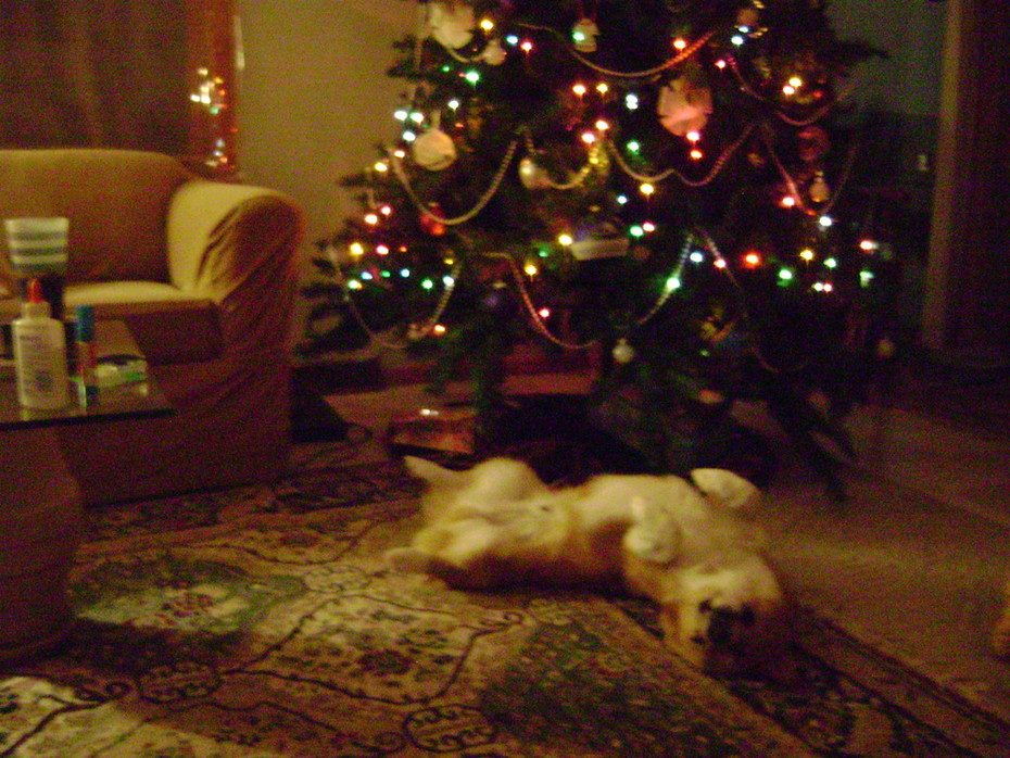 AHHHH I love Christmas
