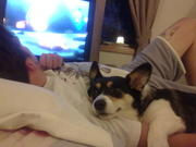 Tilly and the boy like to cuddle together :)