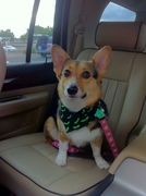 Fresh from the Groomers... Ready for Holloween 2010!
