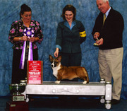 Lucy Best in Show Hutchinson, MN