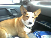 Toby in the car
