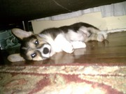 under the couch 12 wks