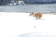 Lake Hemet 2/20/11