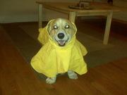Bailey's old rain jacket