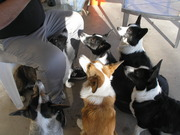 Dogs wanting to help Dad eat a sandwich