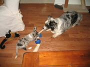 Teri and her little sister, Annie, playing.