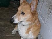 dogsfall2011 009