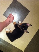 About same size as my foot