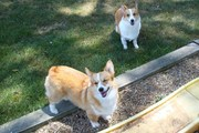 Herky and Happy Mia outside!