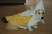 Alphonse_Banana