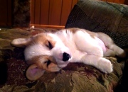 A puppy's life is so hard
