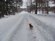 Lucy on Rectory Road Feb 9