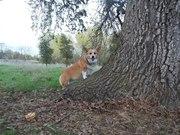 Daisy And The Oak Tree