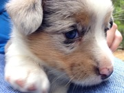 Blue eyed baby <3