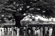 Árvore do Óleo Angola Missa Padre Osório 1939
