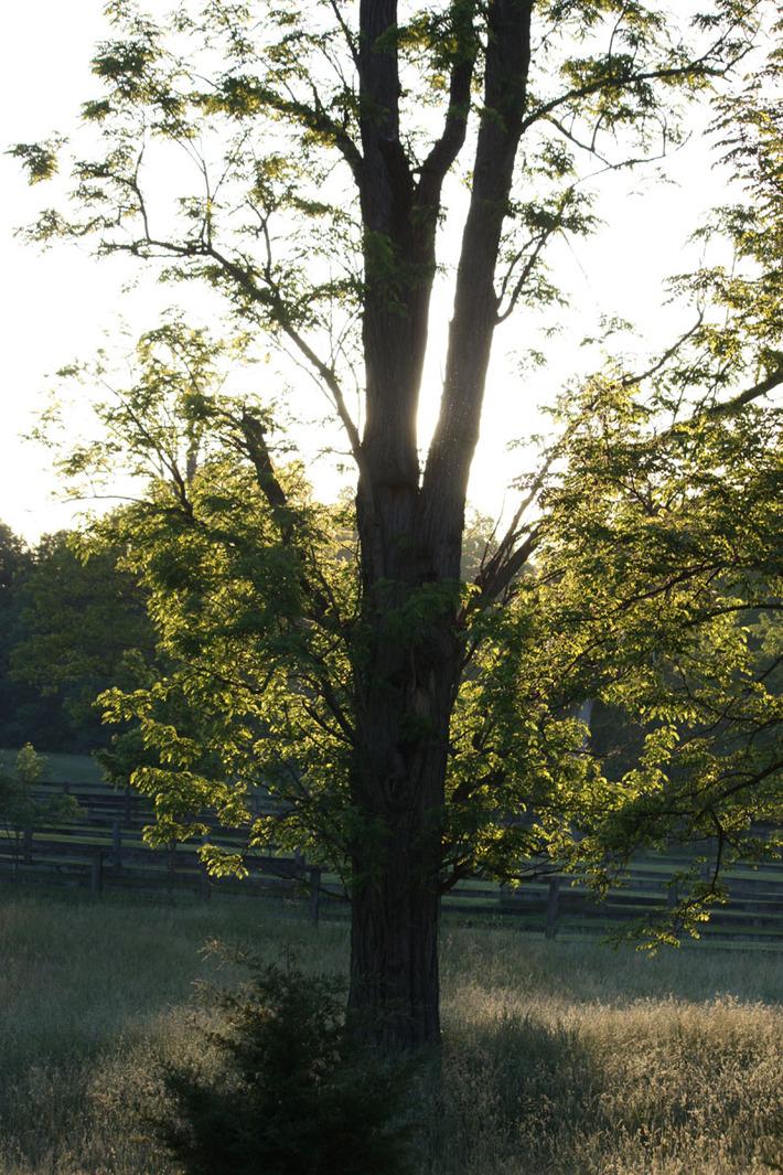 Sunrise in the field.