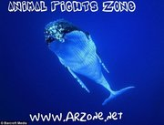 ARZone HB whale