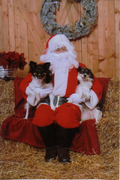 My dogs first picture with Santa get-attachment.aspx