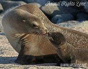 ARZone Aust. Sea Lions