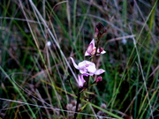 Along the Fire Prairie trail in Big Cypress in February.