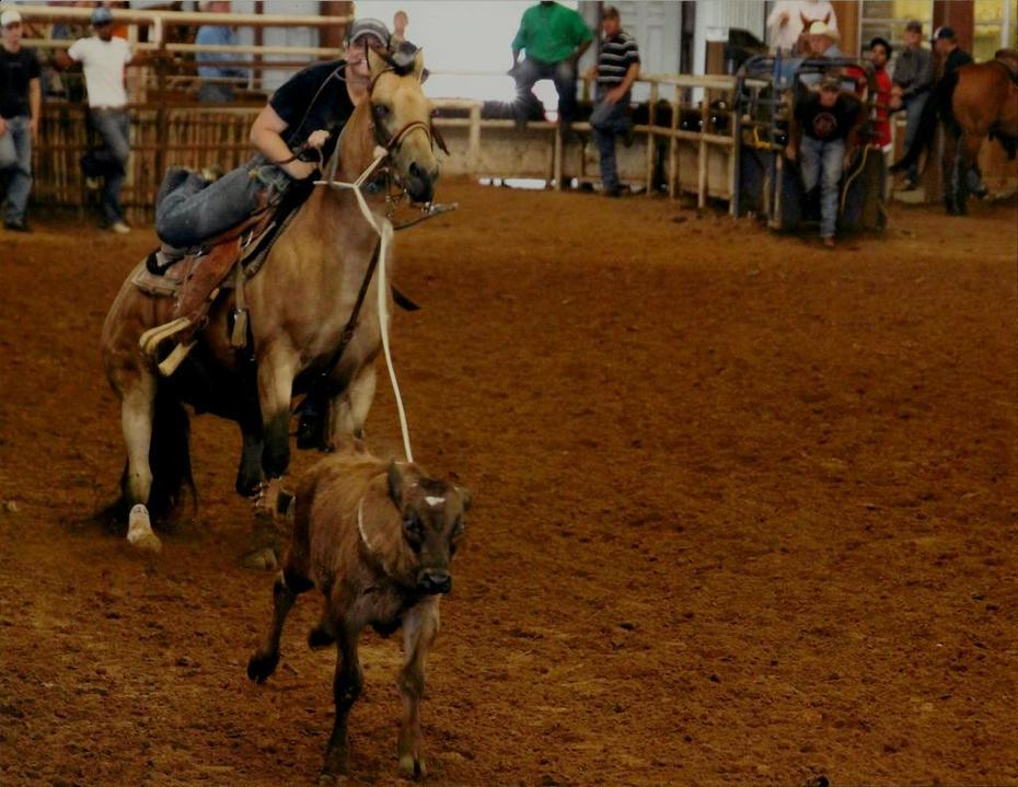 Pooh's 1st Roping #1