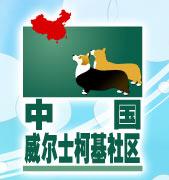 Corgi in China