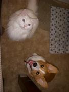 My cat N' Corgi R' best friends!