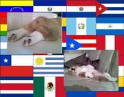 ¡MiCorgi para Latinos!