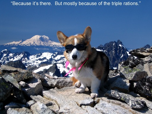 Best of MyCorgi.com