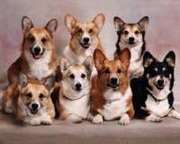 Michigan Corgi Meetup!