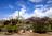 Tucson Corgi Group