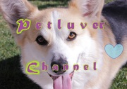 Corgis With A Youtube *Website*