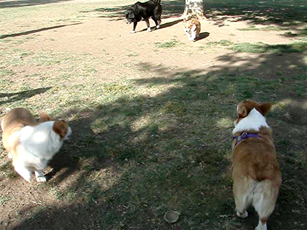 Pupsters enjoying a day in the doggy park. . .4-27-08