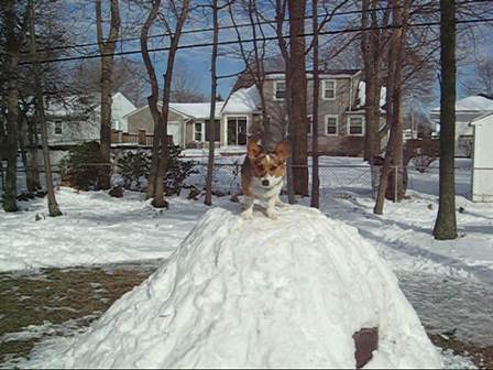 Emmy's snow mountain  & ball chase