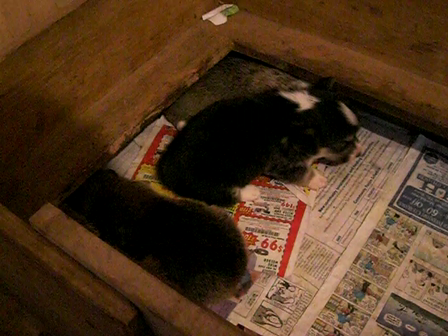 Three week old J.D. Turk and Mily little cuties