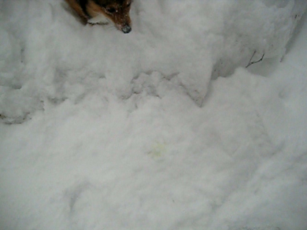 Max Playing in snow at Cabin