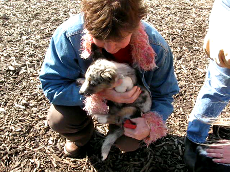 Robin holding the Cardigan puppy